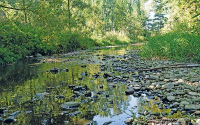 Problem Niedrigwasser