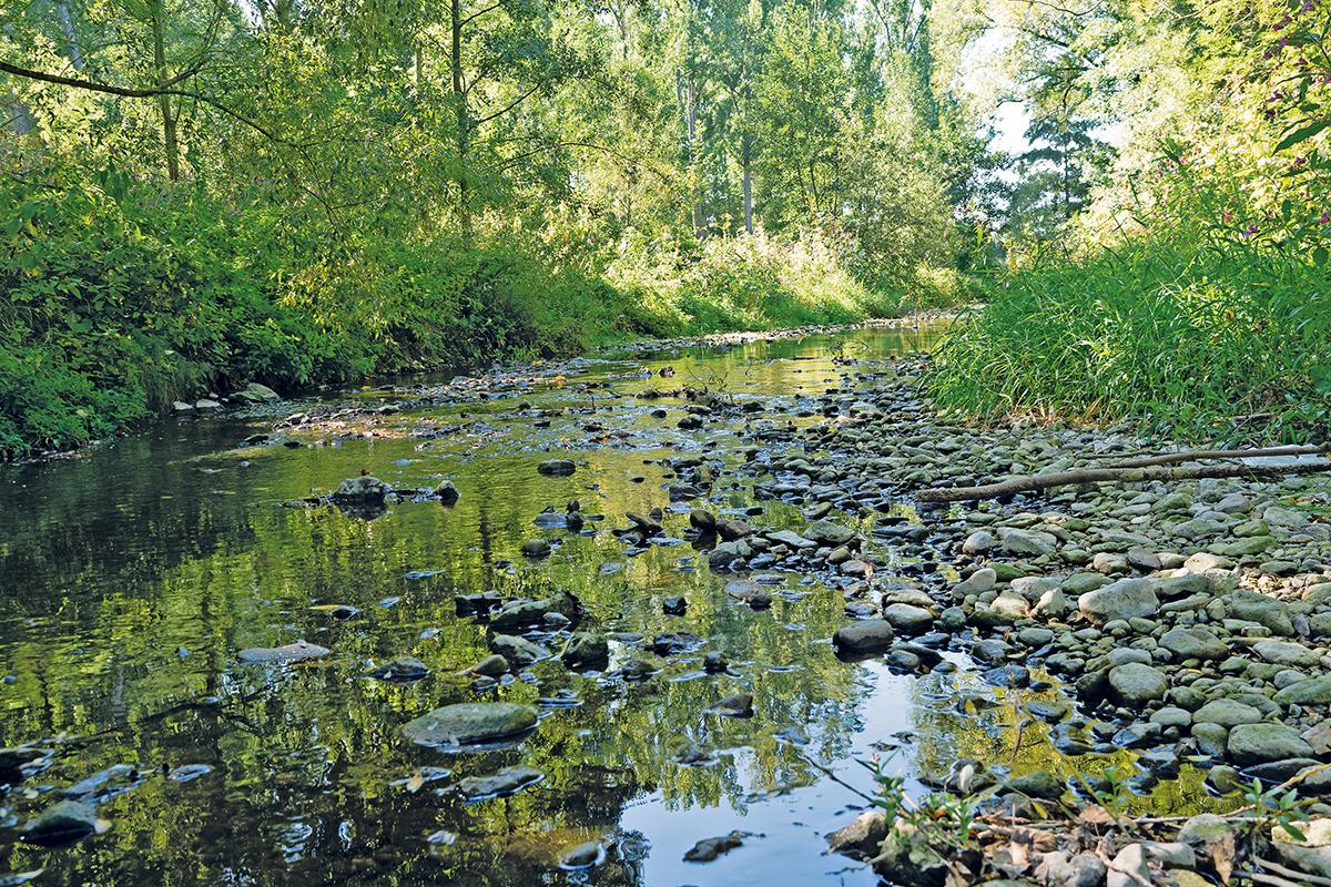 Burgen-Blick -Problem Niedrigwasser