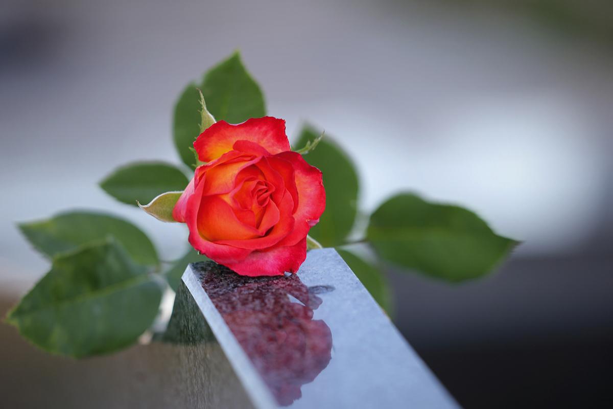 Burgen-Blick Nachruf - Rose auf Marmor