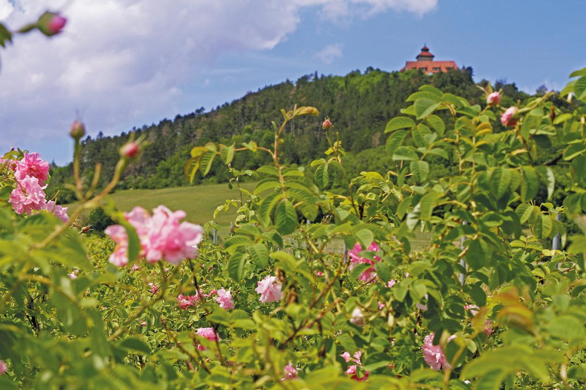 Burgen-Blick - Holzhäuser Rosenrausch 2021